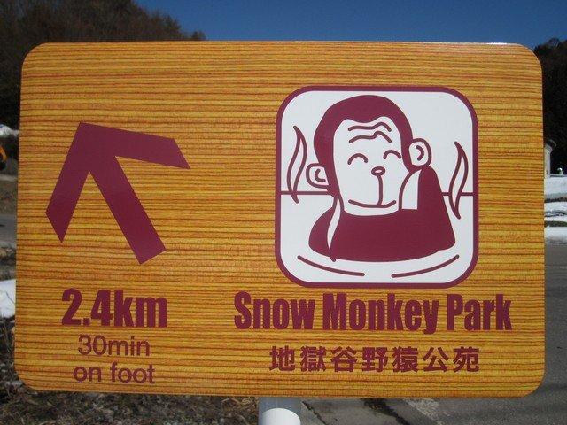 snow monkeys onsen monkeys