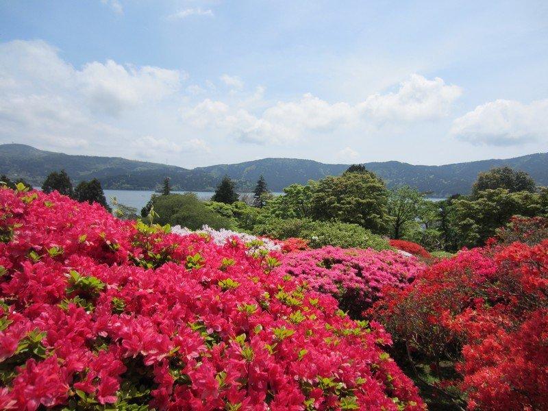 japanese flowers 1