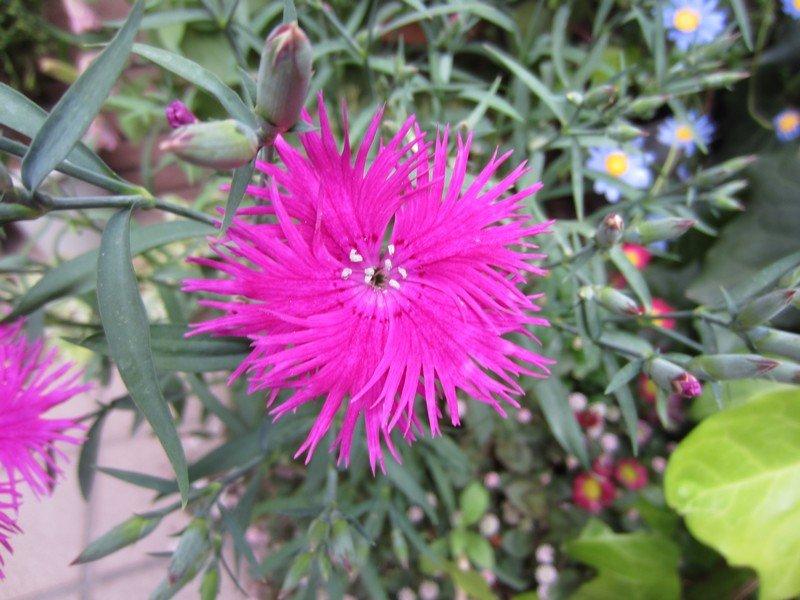 flowers japan 13