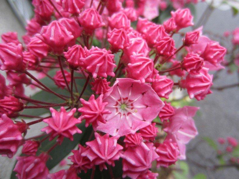 flowers japan 15