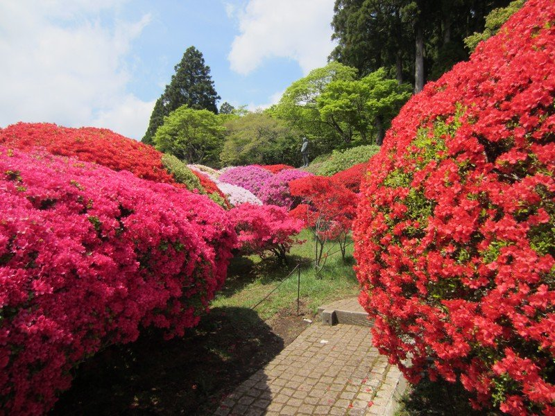 flowers japan 23