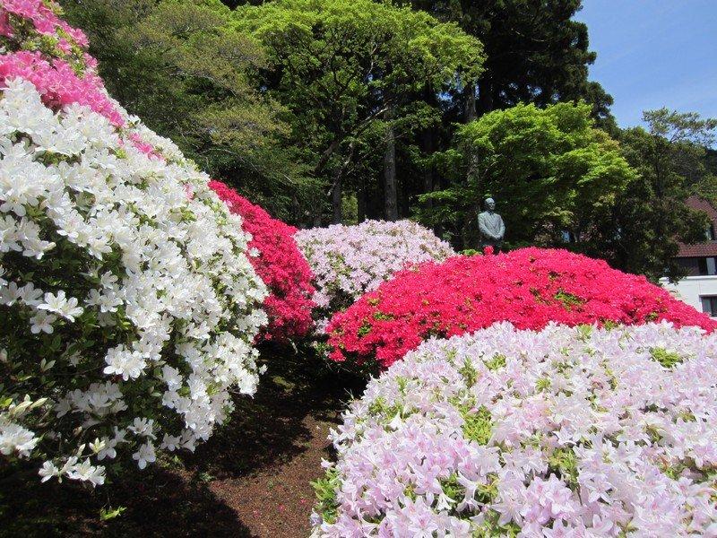 flowers japan 27