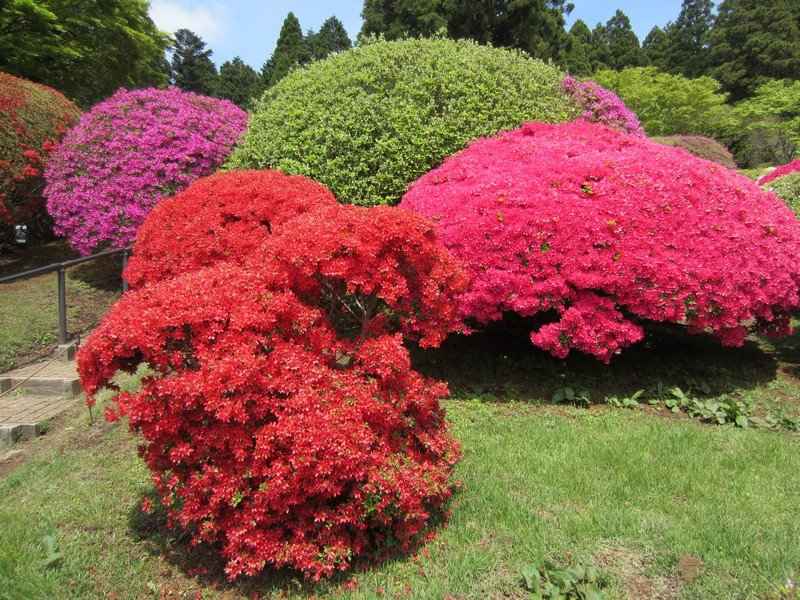 flowers japan 28