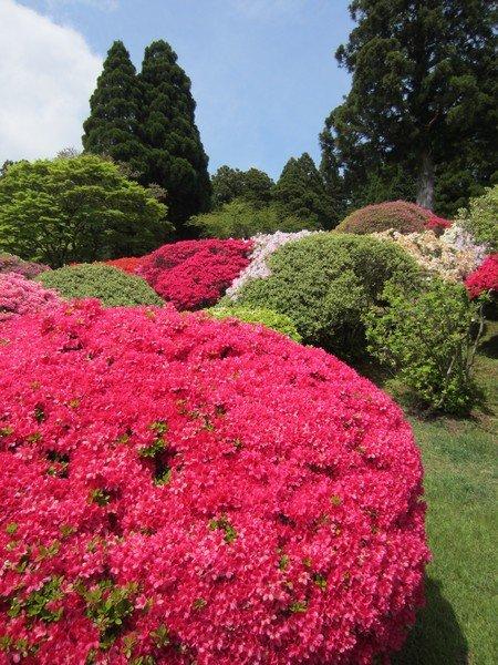 flowers japan 29