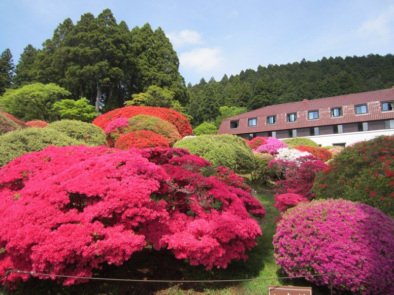 flowers japan 30