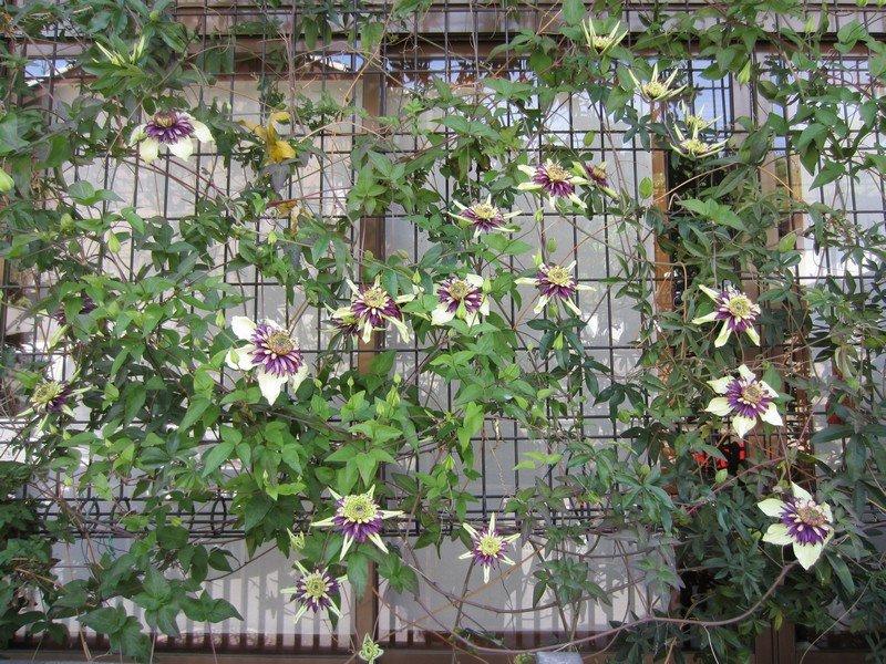flowers japan 33