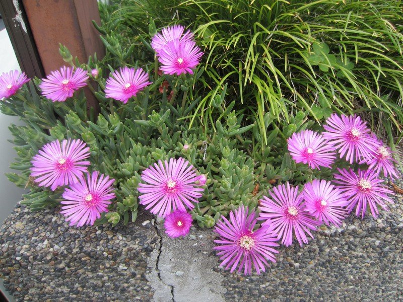 flowers japan 36