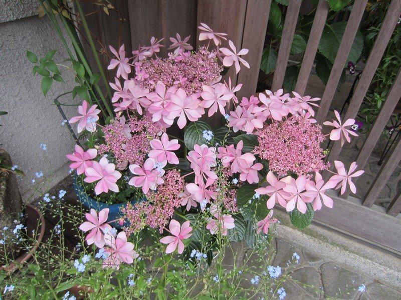 flowers japan 43