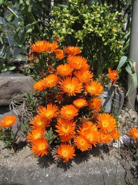 flowers japan 62