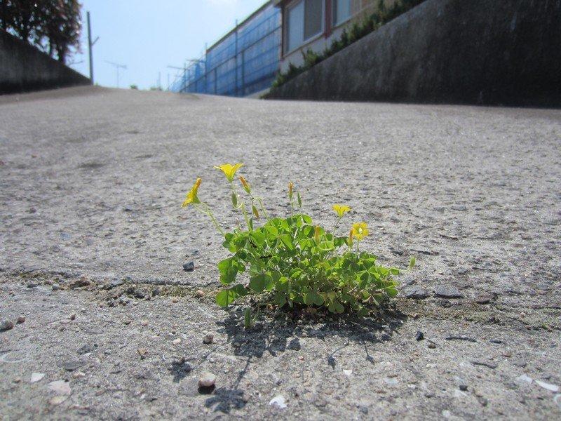 flowers japan 64