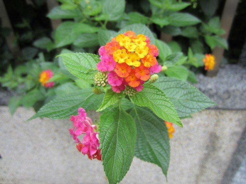 flowers japan 70