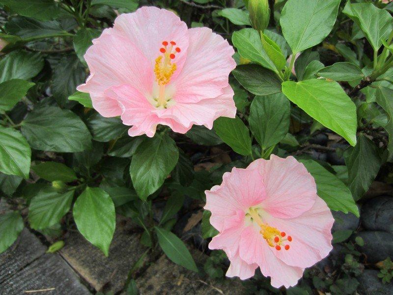 flowers japan 71