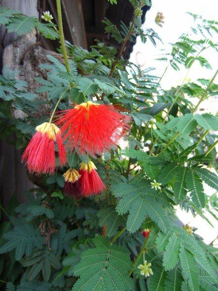japanese flowers 8