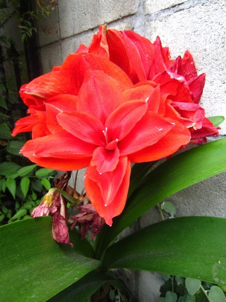 japanese flowers 9
