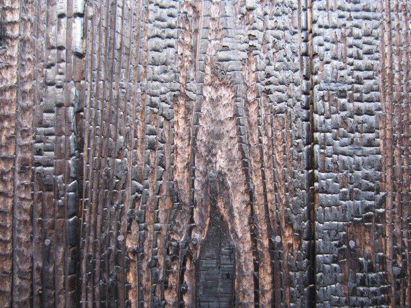 japanese wood y