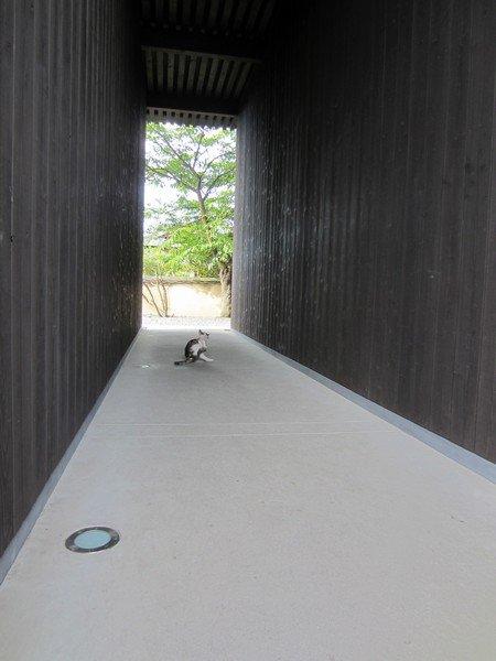 wood teshima 5