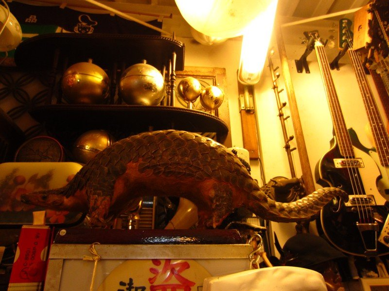expo thrift store ueno22