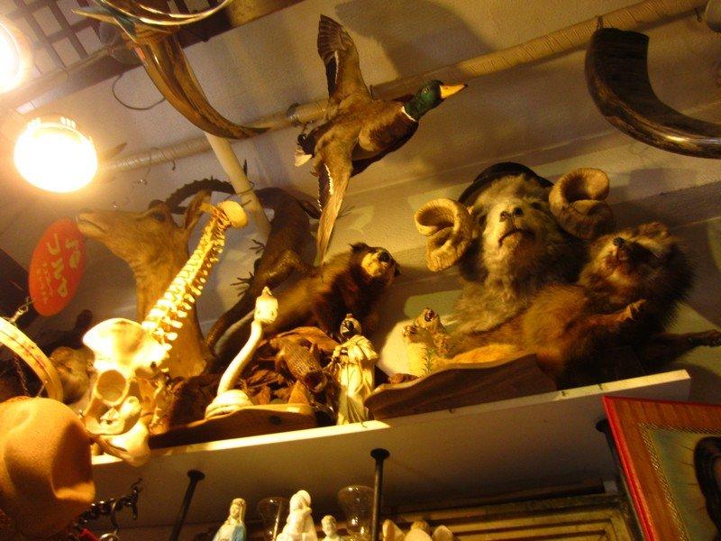 expo thrift store ueno29