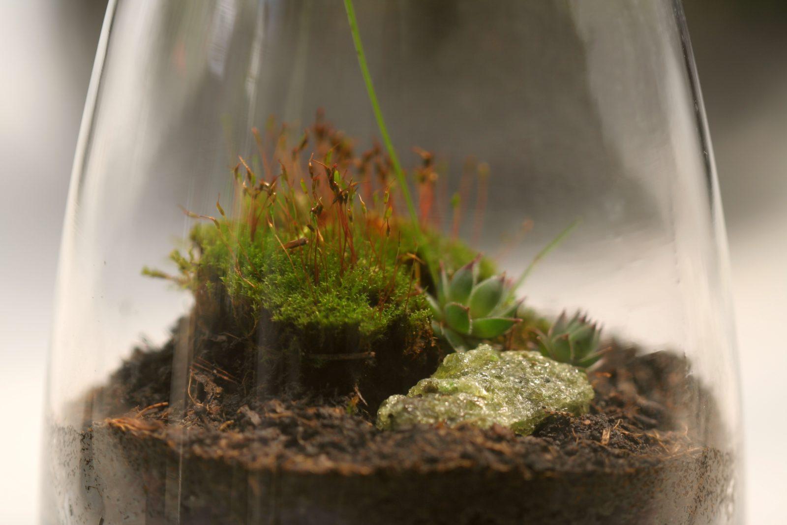 make your own terrariums 1