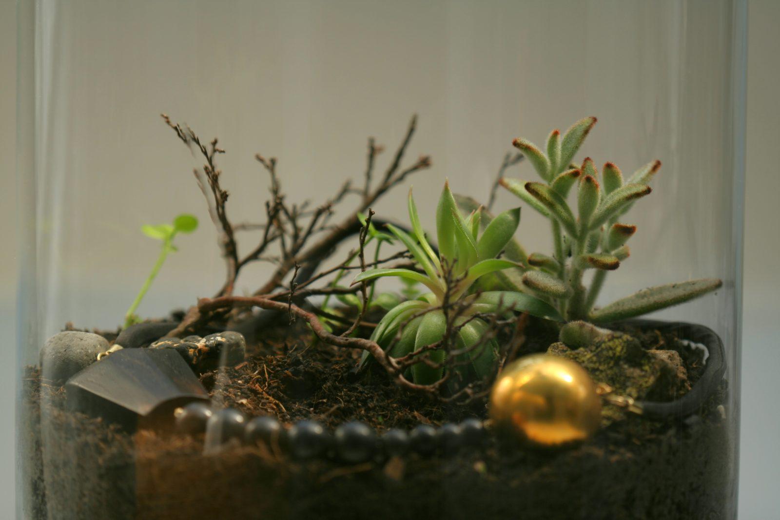 make your own terrariums 2