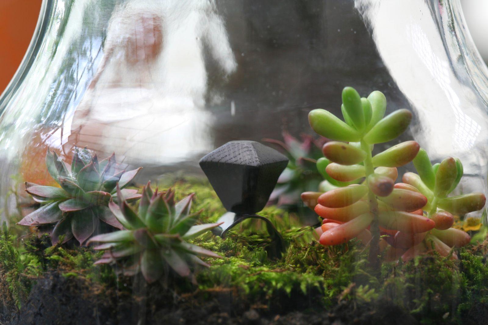 make your own terrariums 5