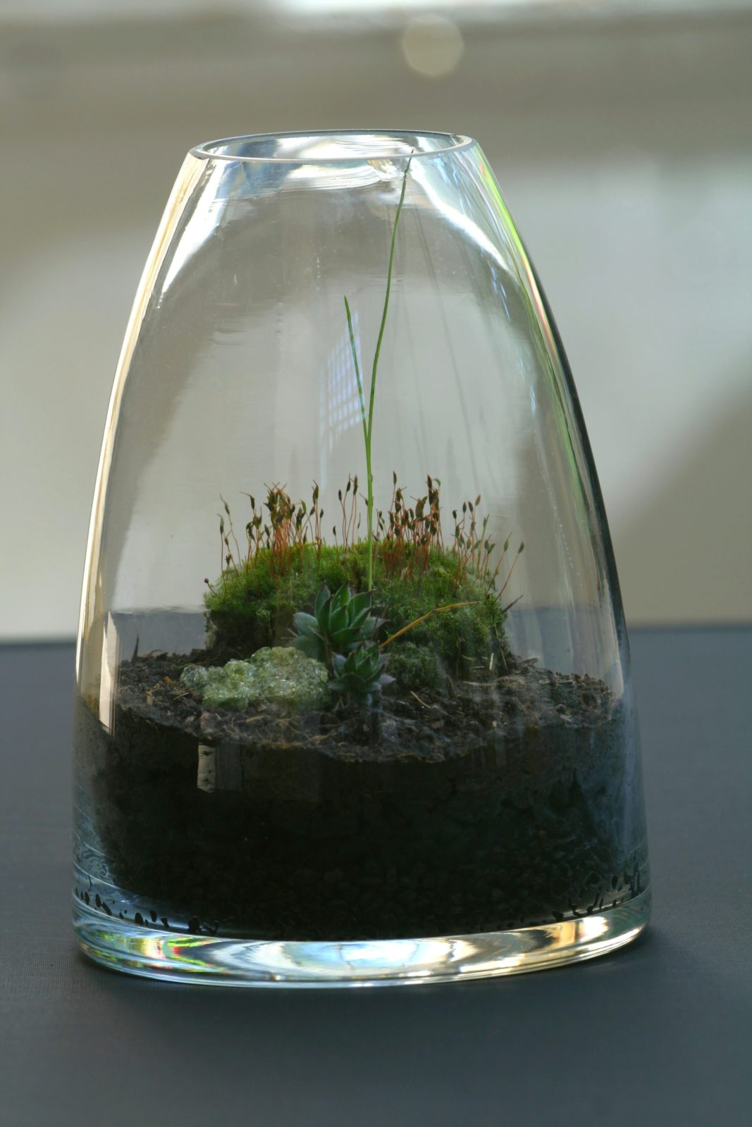 terrariums 3