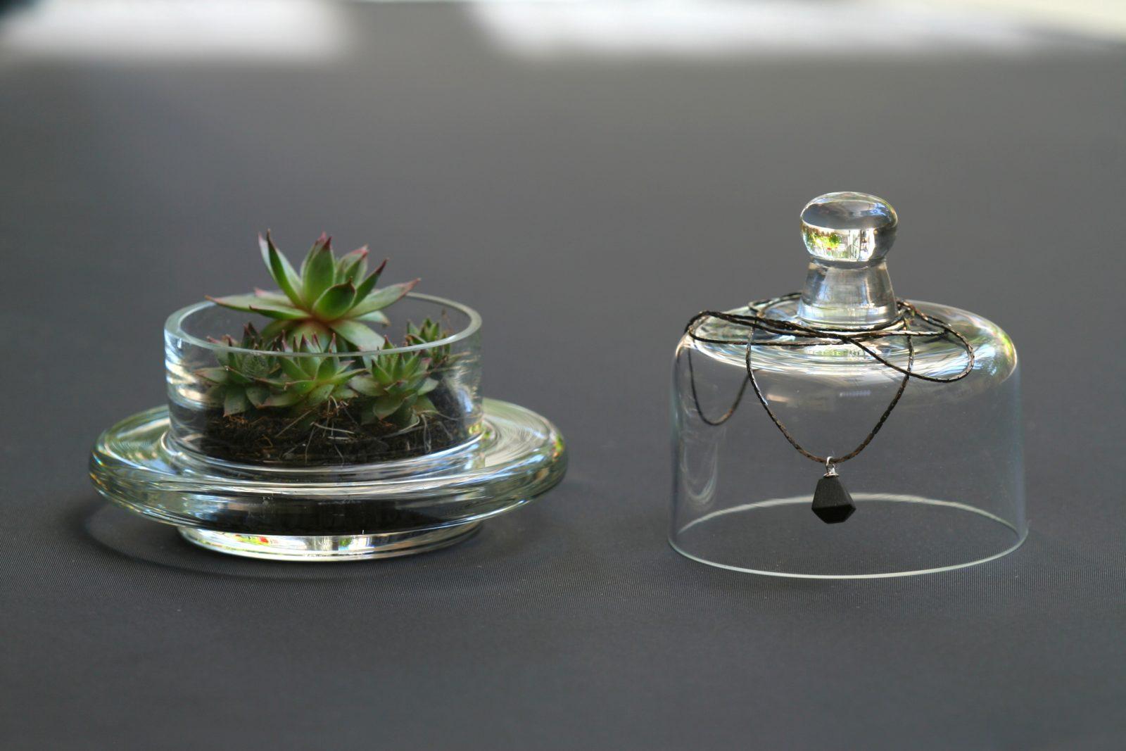 terrariums 4